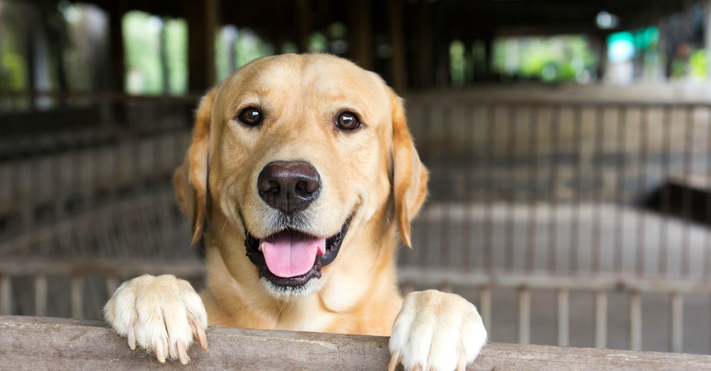 Lo que debes saber antes de adoptar un perro